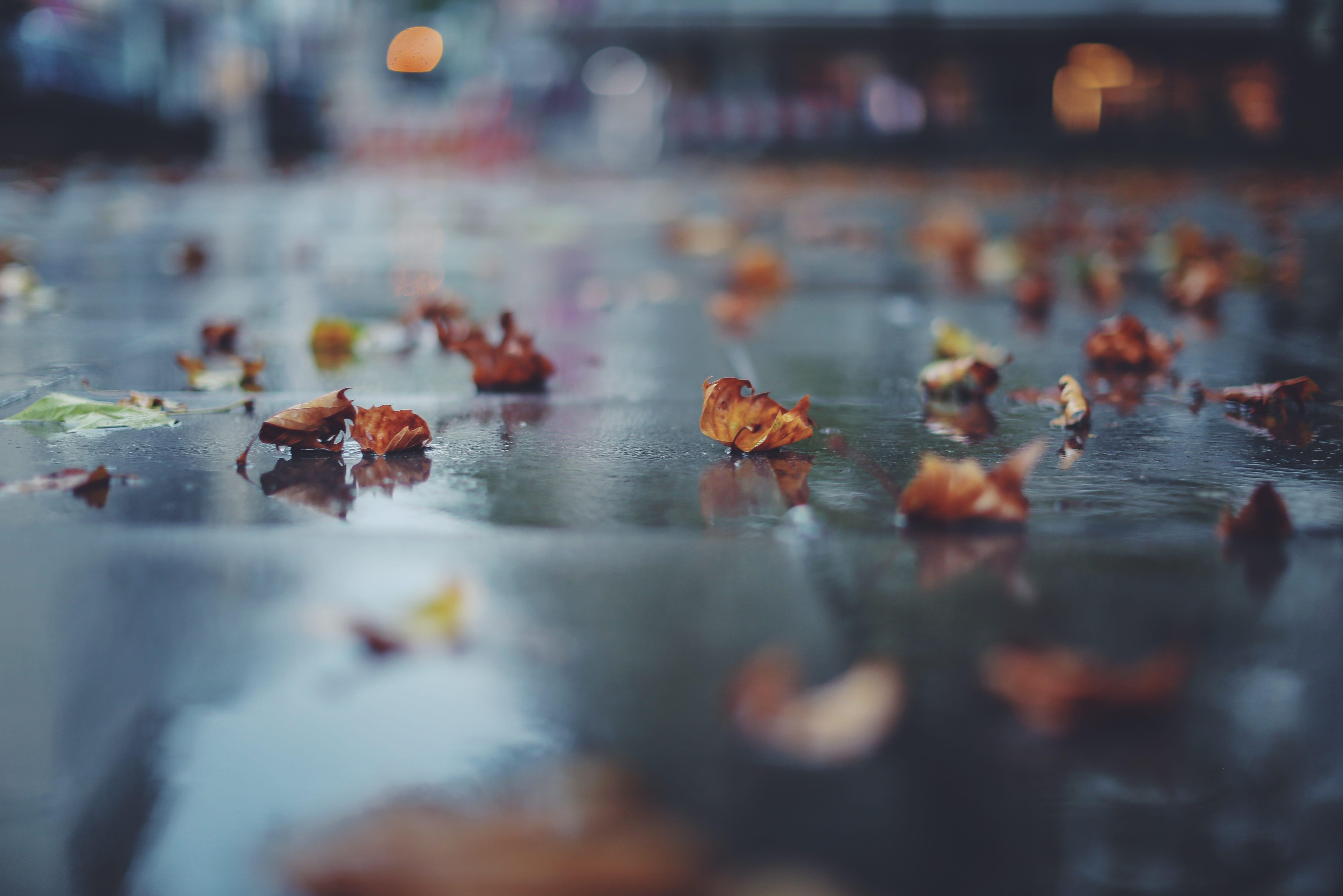 Esős november Hajdúszoboszlón - ha ez önmagában nem dob fel, akkor olvass tovább!