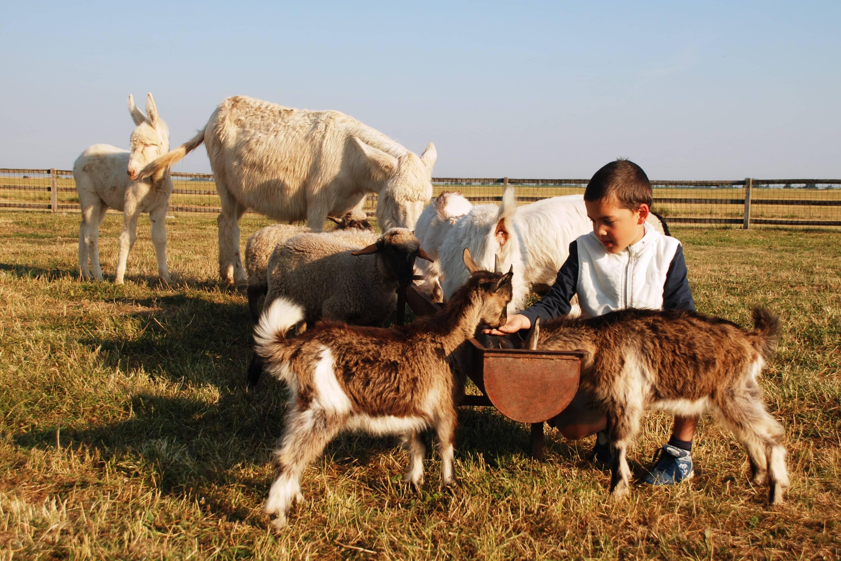 A hosszú hétvége Hajdúszoboszlón most azért sem rossz ötlet, mert például a Pusztai Állatparkban most ünneplik az állatok világnapját. És még ezen kívül is van mit nézni, csinálni!